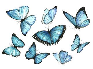 Plavi leptiri. Postavi. Ilustracija akvarela