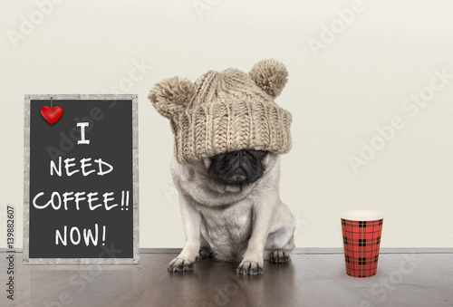 Photo cute pug puppy dog with bad morning mood, sitting next to blackboard sign with t