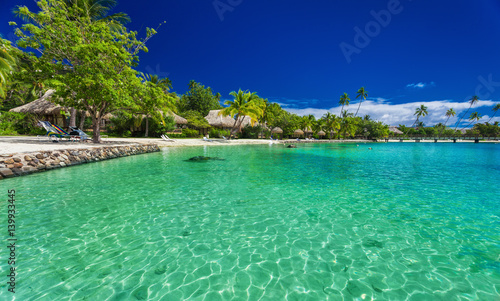 Poster Tropical plage Beach with palm trees at a tropical resort on Moorea island