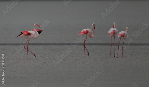 Foto op Aluminium Flamingo animal