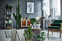 Room With Cacti Decorations