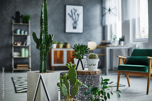 Fotobehang Cactus Room with cacti decorations