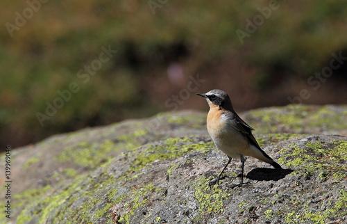 Staande foto Vogel Wildlife