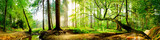 Fototapeta Las - Idyllischer Wald mit Bach bei Sonnenaufgang