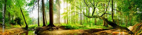 Foto op Aluminium Bossen Idyllischer Wald mit Bach bei Sonnenaufgang