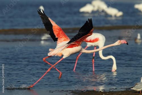 Foto op Aluminium Flamingo wildlife
