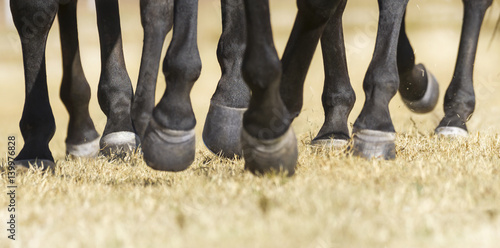Closeup detail of herd of horse legs running