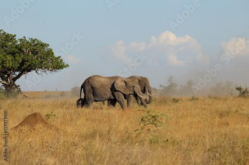 Foto op Aluminium Olifant animal