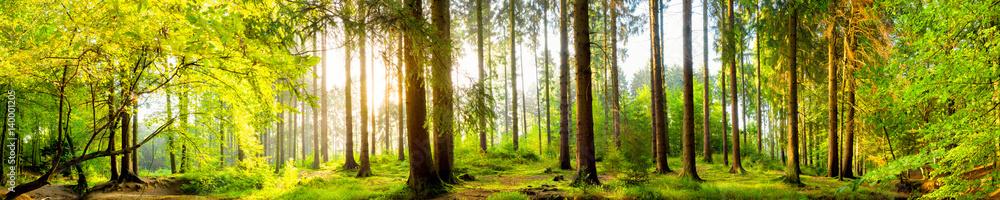 Idyllischer Wald bei Sonnenaufgang