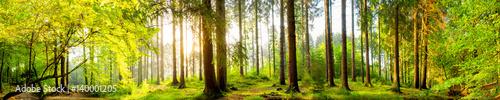 Fototapeten Wald Idyllischer Wald bei Sonnenaufgang