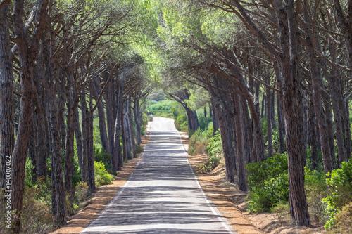 Spoed Foto op Canvas Weg in bos Landscape of straight road under the trees on Sardinia Island, Italy