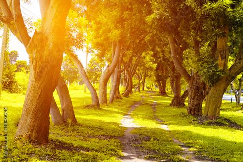 piekny-jesienny-park-w-sloneczny-dzien