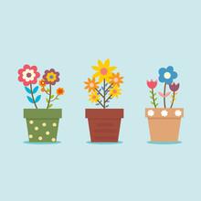 Three Beautiful Flower Pot