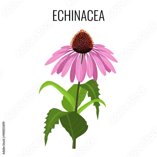 Echinacea ayurvedic herbaceous flowering plant isolated on white Wall mural