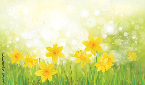 Photographie  Vector  yellow daffodil flowers background.
