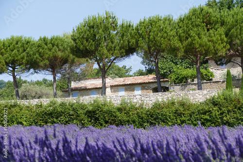 In de dag Lavendel Bauernhaus hinter Lavendelfeldern