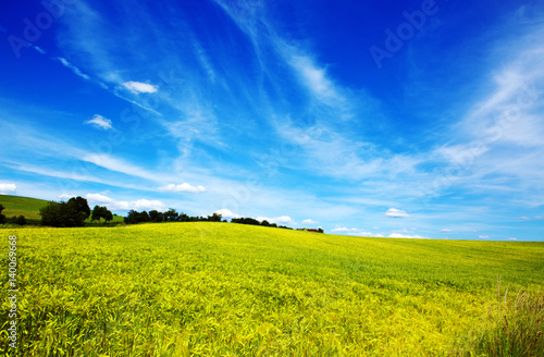 Wall Murals Dark blue Field of grass and blue sky: