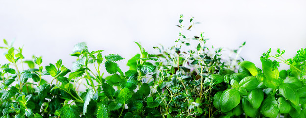 Panel Szklany PodświetlaneGreen fresh aromatic herbs - melissa, mint, thyme, basil, parsley on white background. Banner collage frame from plants. Copyspace. Top view.