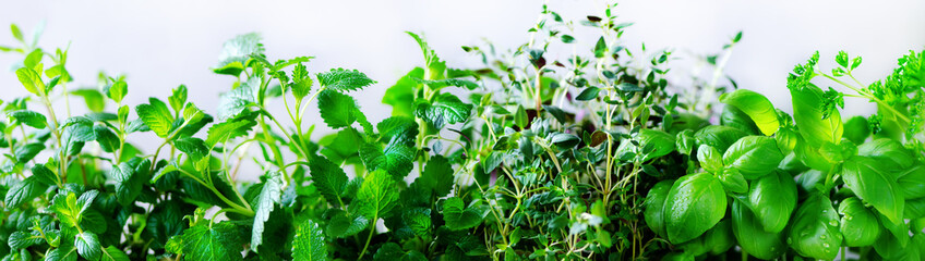 Green fresh aromatic herbs - melissa, mint, thyme, basil, parsley on white background. Banner collage frame from plants. Copyspace. Top view. Toned effect.