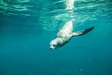 Underwater View Of California ...