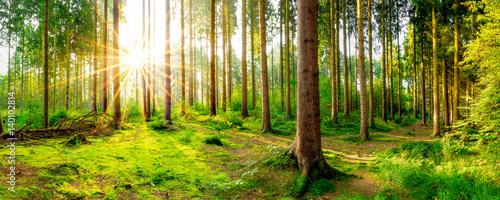 Wall Murals Forest Ein Morgen im Wald mit wunderschönem Sonnenaufgang