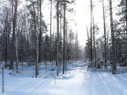 Deurstickers Berkbosje Winter Forest, Russia