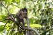 Bali Indonesia Ubud Monkey Forest Baby climbing