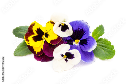 Canvas Prints Pansies Stiefmütterchen isoliert auf weiß
