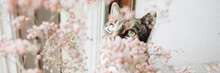 Happy Spring-time With Amazing Cat - Banner