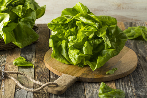 Cuadros en Lienzo Raw Green Organic Boston Butter Lettuce