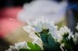 Flor branca em casamento