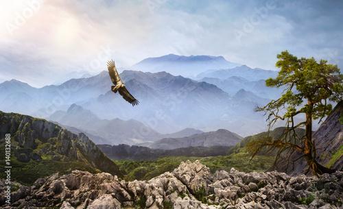 Poster Aigle Geier am Himmel im Hochgebirge bei Nebel
