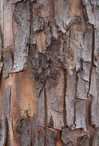 Canvas Prints Textures Tree bark for backgrounds