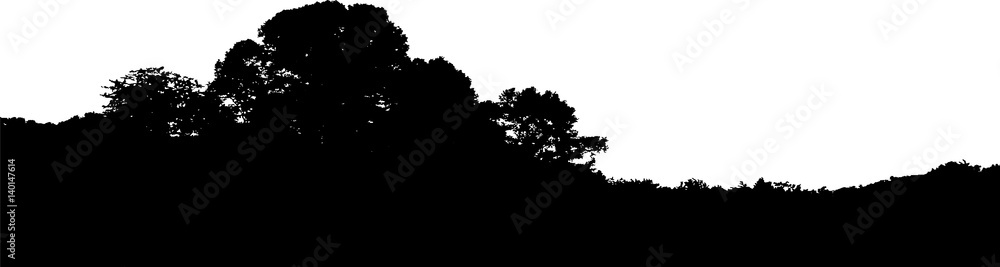 Fototapeta Realistic trees silhouette. Horizontal landscape vector. Isolated on white