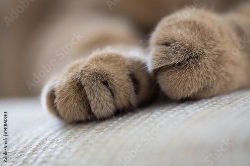 Türaufkleber Makrofotografie cat paws closeup macro shot