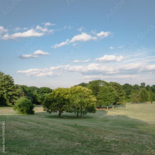 Fotografia, Obraz  Public Park with green grass