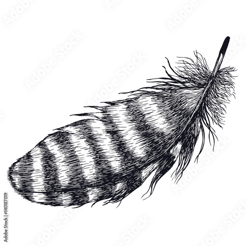 Black feather Isolated object Hand drawing style