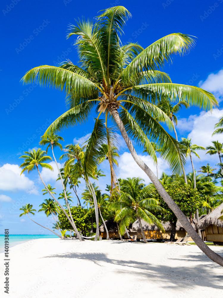 Urlaub am Strand mit Meer und Palmen Foto, Poster, Wandbilder bei ...