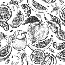 Decorative Seamless Pattern With Ink Hand-drawn Orange, Tangerine And Citrus Slices. Vector Illustration.