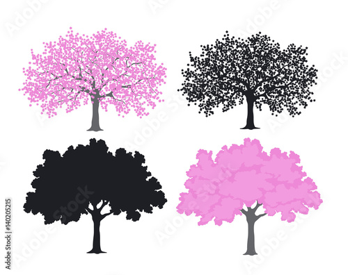 Foto Sakura, cherry blossom tree in color and silhouettes
