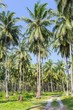 Palm grove in the tropics on a sunny day blue sky