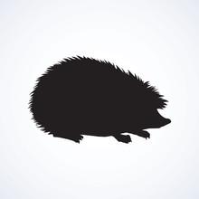 Hedgehog. Vector Drawing