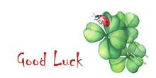 Ladybug Sitting On A Green Fou...