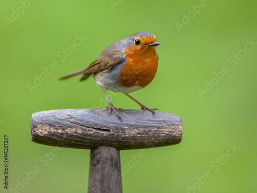 Cuadros en Lienzo Robin perched on handle