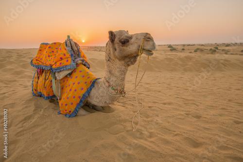 Rajasthan travel background - Indian camel (camel drivers) with camels in dunes of Thar desert on sunset Slika na platnu