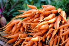 Carrots In Market Organic Vegetables.
