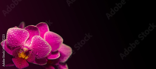 pink-orchids-with-droplets-of-water-and-copy-space-isolated-on-black-floristic-colorful-abstract-spa-background
