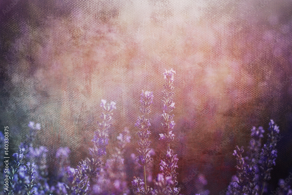 lavender flowers background with textures