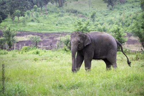 elephant Wallpaper Mural