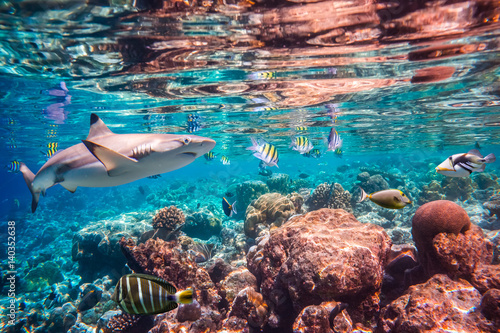 Canvas Prints Under water Tropical Coral Reef.